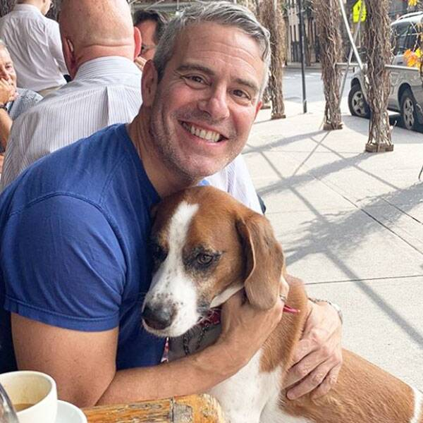 Andy Cohen Announces Rehoming of Beloved Dog Wacha