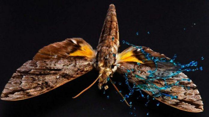 Armor on Butterfly Wings