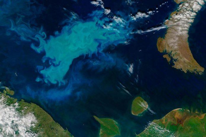 Phytoplankton Bloom Barents Sea