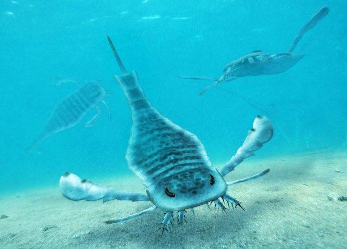 Giant Sea Scorpions