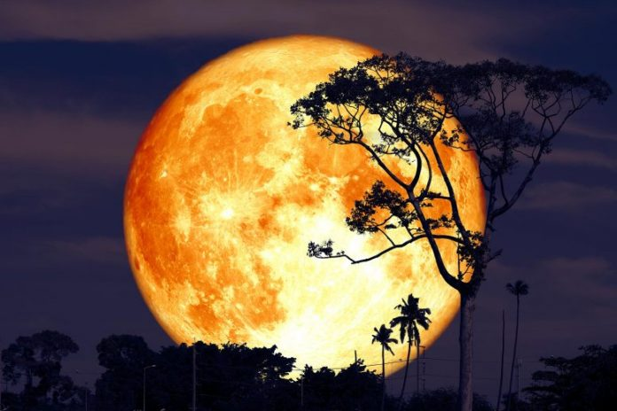 Buck Moon Tree Silhouette