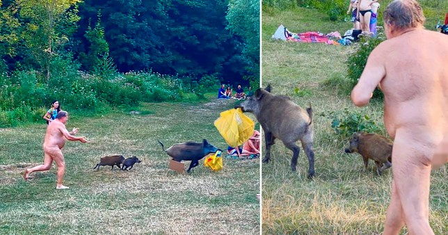 The boar hasn't impressed park authorities...