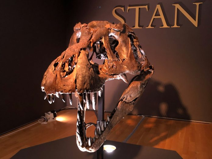 A T. rex skeleton is coming up for auction, expected to fetch $6 million to $8 million