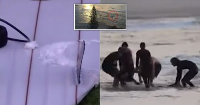 Beach camera footage captured the moment Nick Slater was mauled to death by a shark on Australia's Gold Coast.