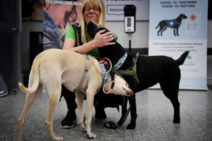 Dogs that are trained to sniff out the coronavirus are being deployed at Helsinki Airport