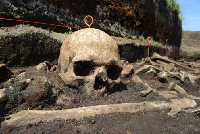 Bronze Age Skull Tollense Valley