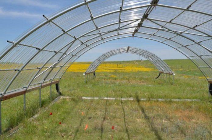 Experimental Drought Shelter Kansas