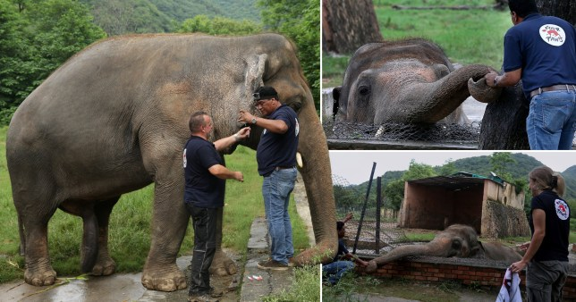 Kaavan the elephant, who is being transferred from a dire zoo in Islamabad, Pakistan after a campaign by animal rights activists