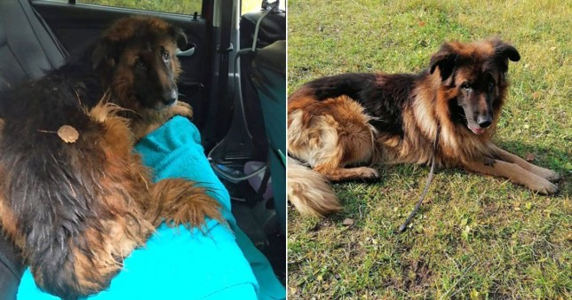 Healthy dog 'put down' by cruel owners digs himself out of grave and walks to roadside waiting for help