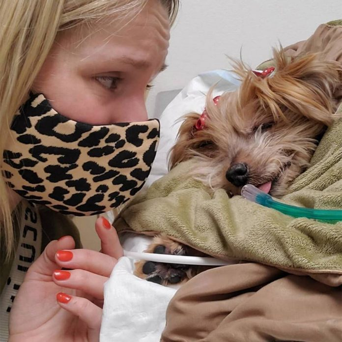 "Kristen Bell & Daughters ""Say Goodbye"" to Beloved Dog Barbara - E! Online"