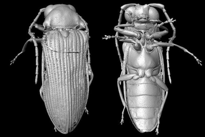 Micro-CT Reconstruction of Mysteriomorphus pelevini