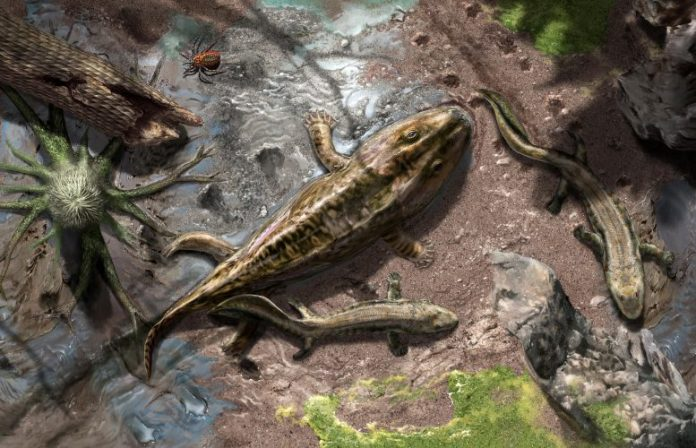 Late Devonian Early Tetrapods