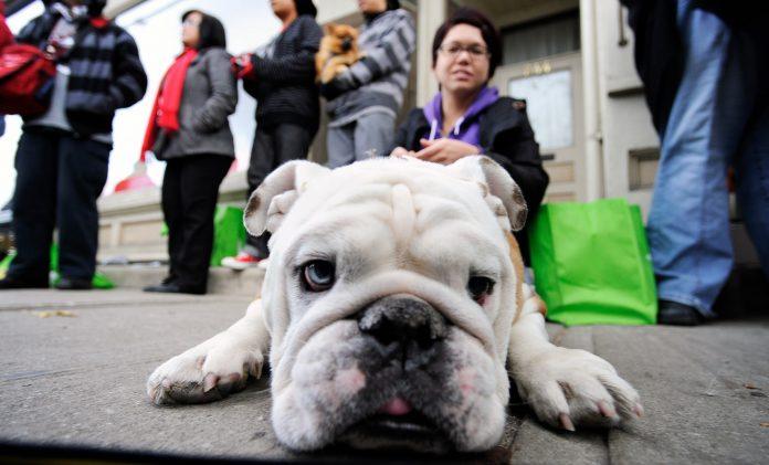 Pet Valu pet supply retailer to shut down U.S. operations