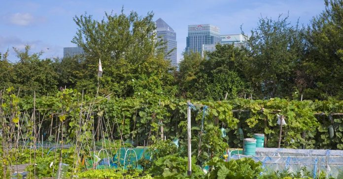 Demand grows for inner city gardening plots as Covid-19 pandemic ravages U.K.