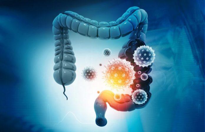 Gut Microbiome Illustration