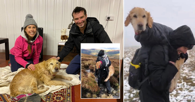 An Irish doctor couple reported to police after rescuing a dog