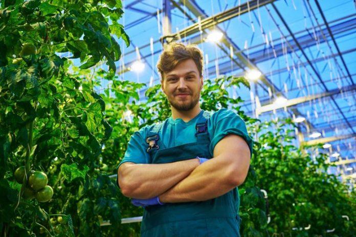 Farmer in Modern Greenhouse