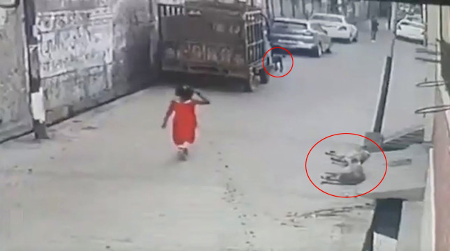Pack of 15 stray dogs attack little girl walking down Indian street