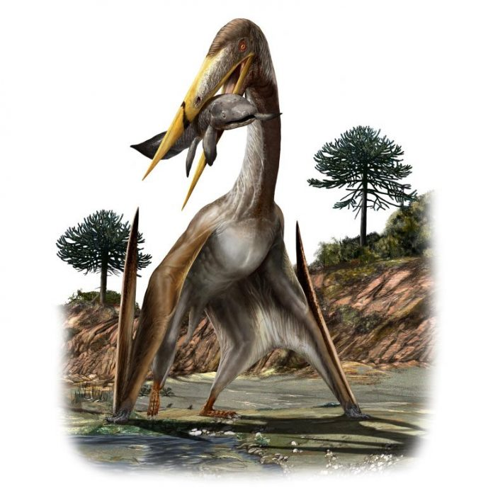 Alanqa saharica Pterosaur