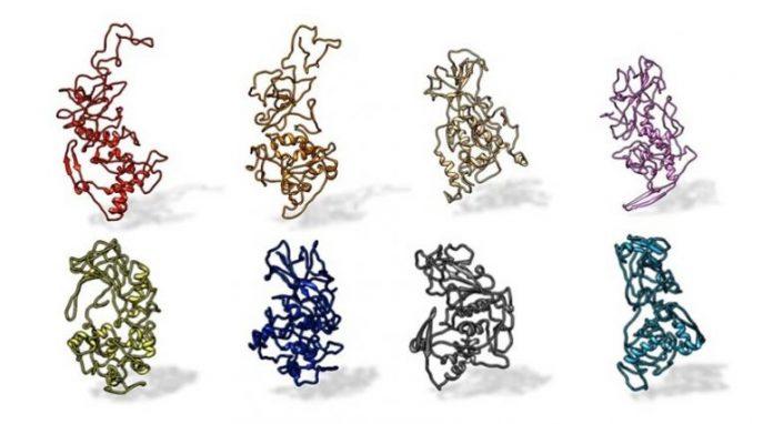 N Protein