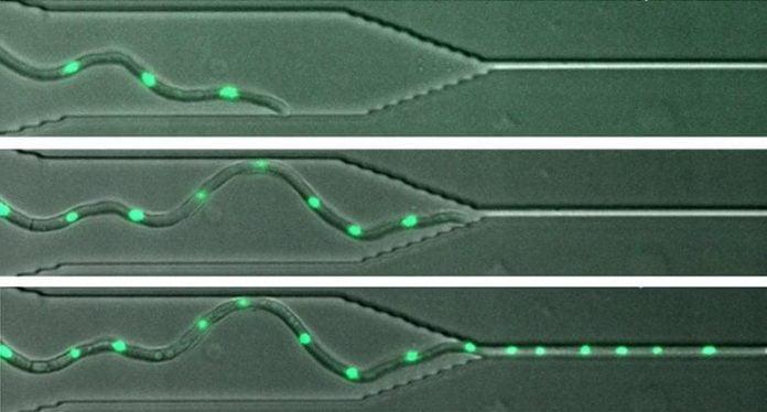 Fungi Can Grow Through Tiny Gaps