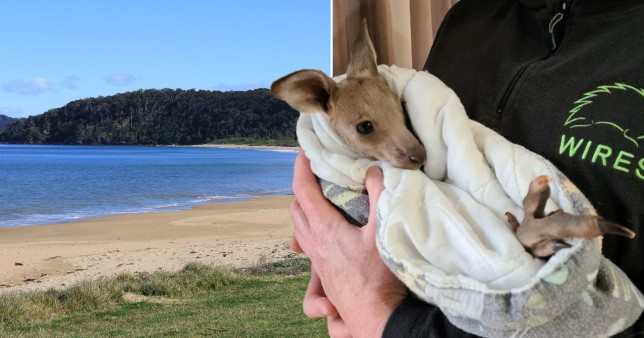Australia: Two teenagers 'deliberately run over and kill 14 kangaroos'